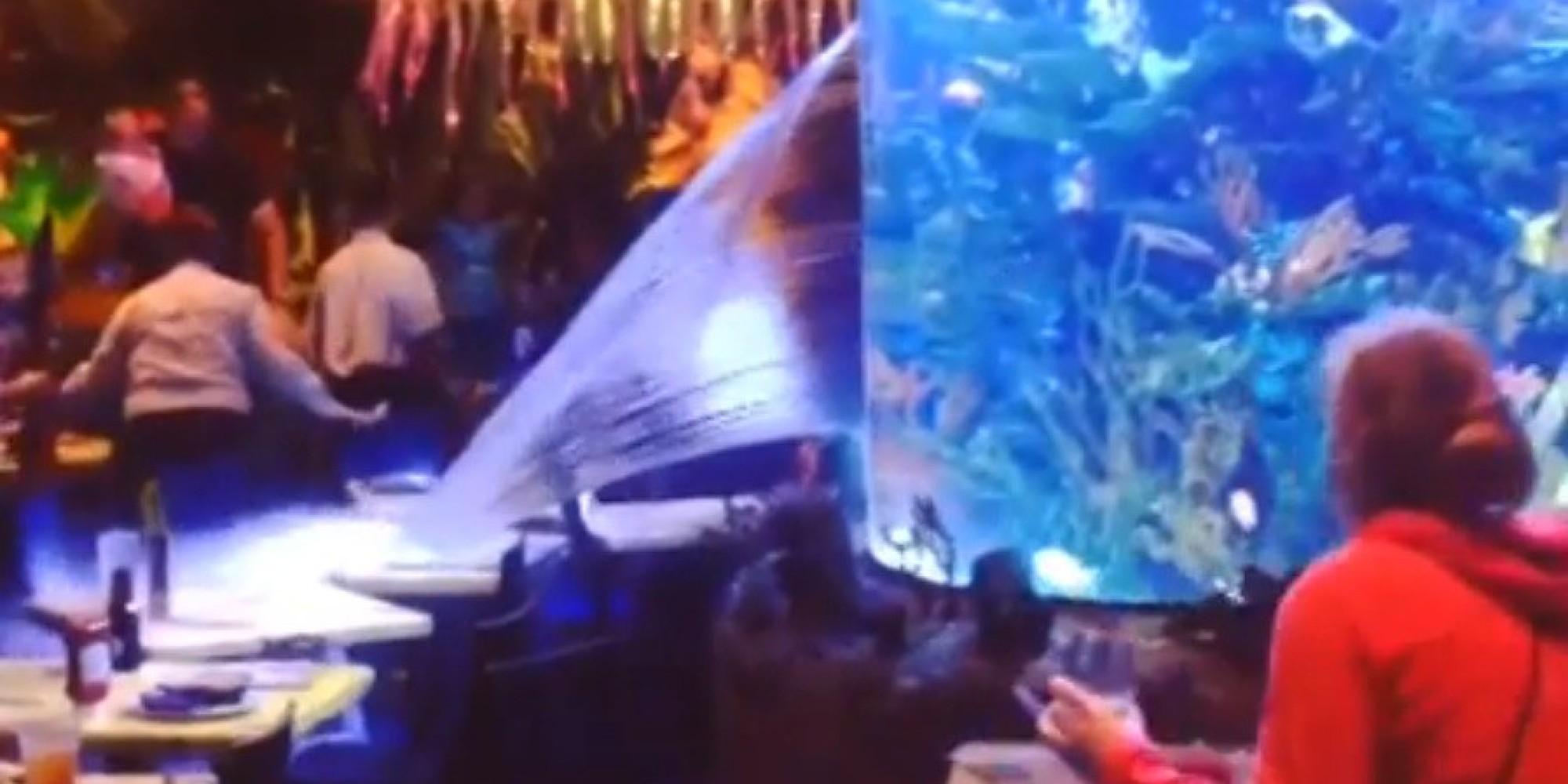 Young disneyworld esplode acquario la gente salva i for How to fix a leaking fish tank