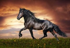 I cavalli Senesi e l'Horse Country di Arborea, parte terza
